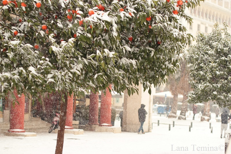 мандарины в снегу на площади аристотеля