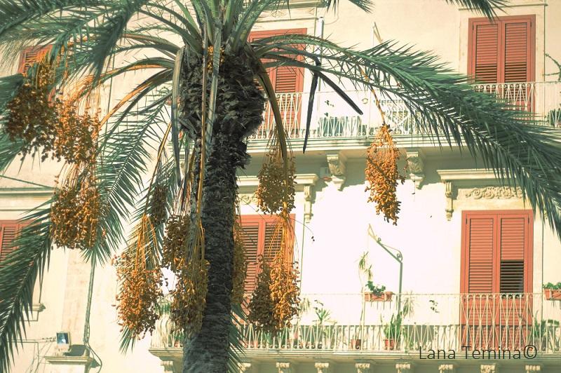 12_noto_sicily_palm