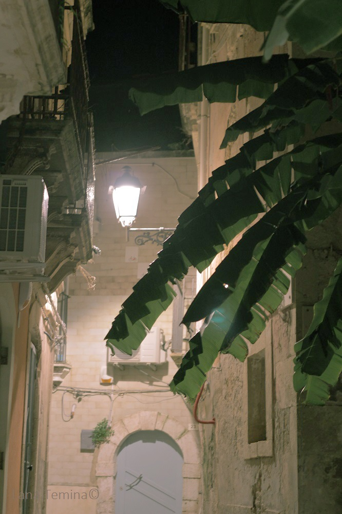 15_siracuse_sicily_Italy_palm_night